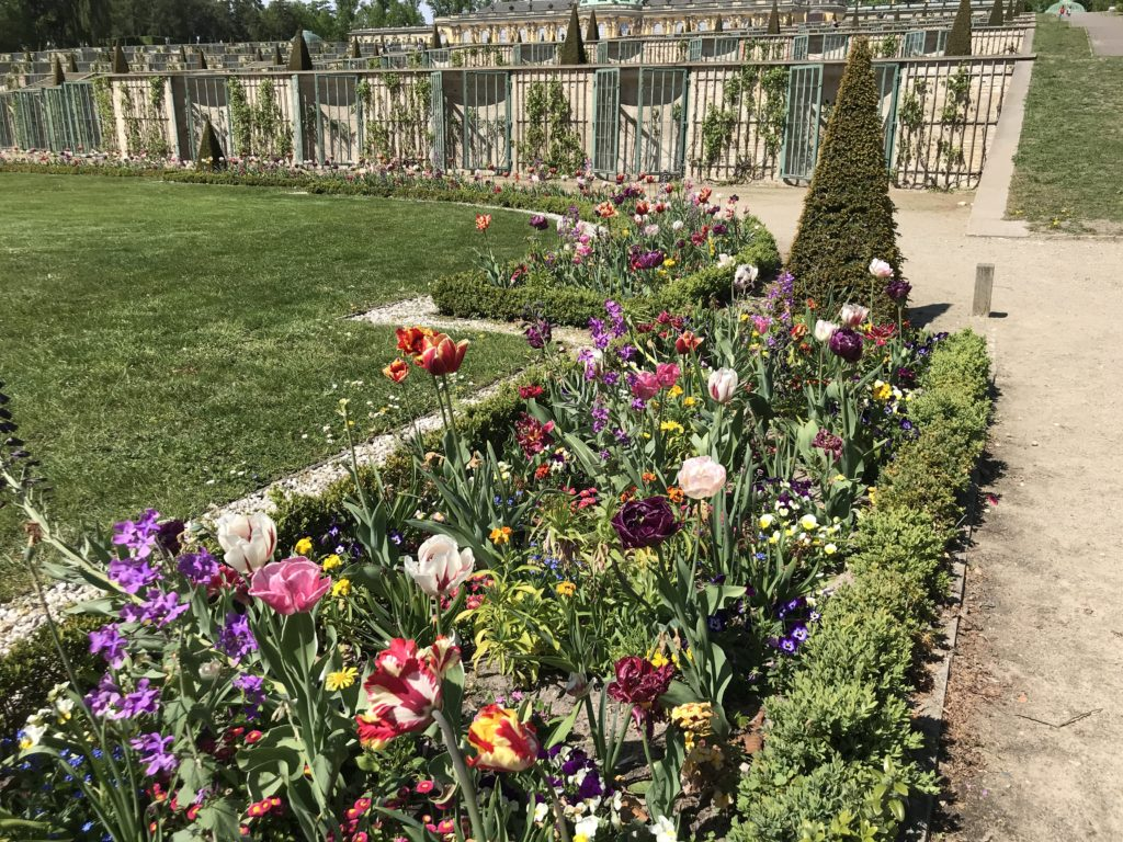 Tulpen im Lustgarten vor dem Schloss